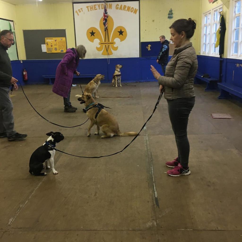 group dog classes essex