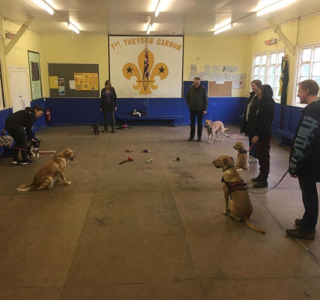 group dog training Essex