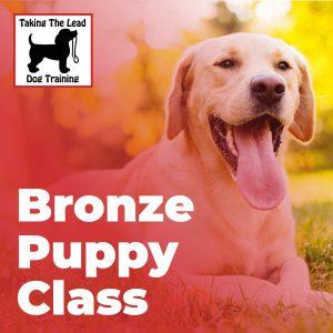 Bronze Puppy Class