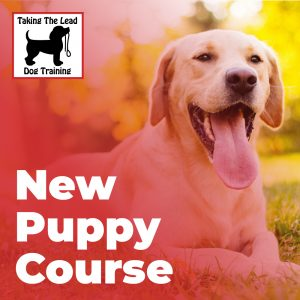 New puppy Course